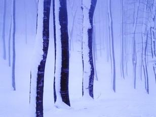 凍てつく木立 乳頭温泉にて