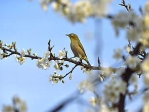 「春の日」
