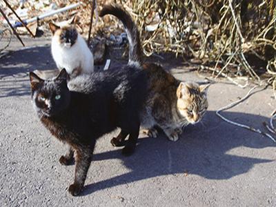 三匹のサムライ