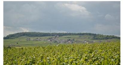 シャンパーニュの丘陵、メゾンとカーヴの画像 p1_15